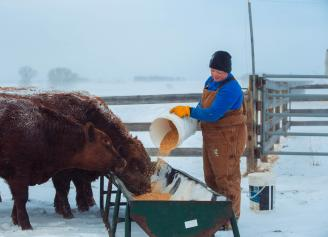 Balanced Mineral for Better Calving