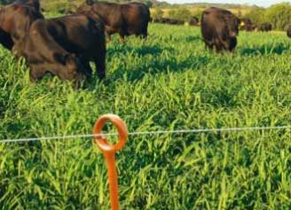 Optimizing the Potential of Pasture through Rotational Grazing