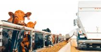 Micro Technologies Feedlot Solutions